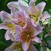 Pink Bridal Bouquet Poster