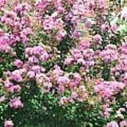 Pink Bush Poster