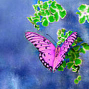 Pink Butterfly Poster