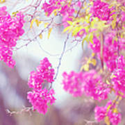 Pink Cascade Of Bougainvillea Poster