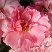 Pink Cluster Poster