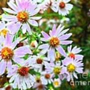 Pink Daisies Flowers Poster