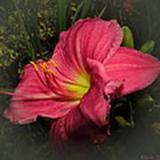 Pink Day Lily Poster