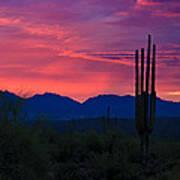 Pink Desert Skies  Poster