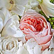 Pink English Rose Among White Roses Art Prints Poster