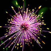 Pink Fireworks  Poster