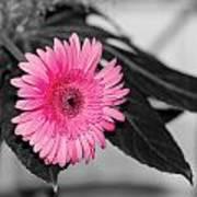 Pink Flower Poster by Amr Miqdadi