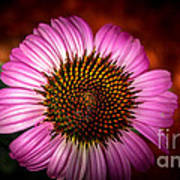 Pink Flower Blooming Poster