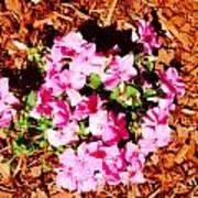 Pink Flower Garden Poster