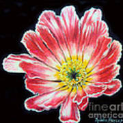 Pink Flower Painting Oil On Canvas Poster by Drinka Mercep