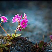 Pink Flower With Inkbrush Calligraphy Joyfulness Poster
