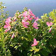 Pink Flowers By The Lake Poster
