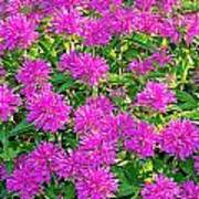 Pink Garden Flowers Poster