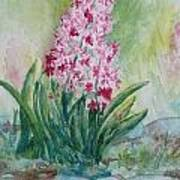 Pink Hyacint Poster