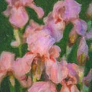Pink Iris Family Poster
