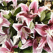 Pink Lilies I Poster