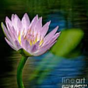 Purple Petals Lotus Flower Impressionism Poster
