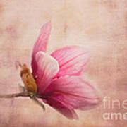 Pink Magnolia I Poster