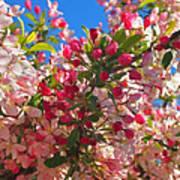 Pink Magnolia Poster by Joann Vitali