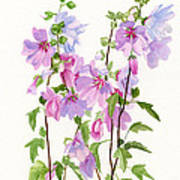 Pink Mallow Flowers Poster