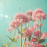 Pink Milkweed Poster