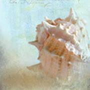 Pink Murex Seashell Poster