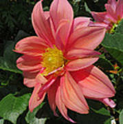Pink Orange Center Flower Poster