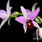 Pink Orchids Cascading Poster
