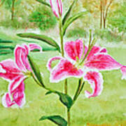 Pink Oriental Lillies Poster