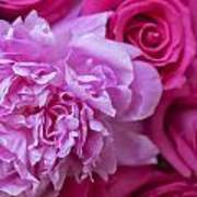 Pink Peonies And Pink Roses Poster