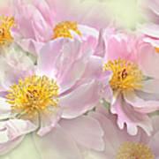 Pink Peony Flowers Parade Poster