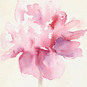 Pink Peony Watercolor Paintings Of Flowers Poster