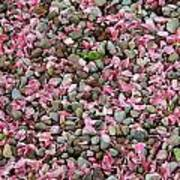 Pink Petals On Stones  Poster