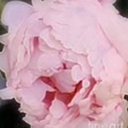 Pink Pink Poster