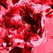 Pink Red Flower Poster