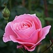 Pink Rose Bud I Poster