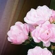 Pink Rose Cluster Poster