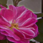 Pink Rose Digital Art 2 Poster