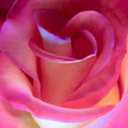 Pink Rose Pedals Poster