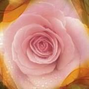 Pink Rose Romance  Poster