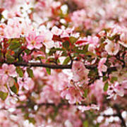 Pink Spring Apple Blossoms Poster