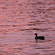 Pink Sunset With Duck In Silhouette Poster by Marianne Campolongo