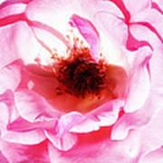 Pink Tourmaline Palm Springs Poster