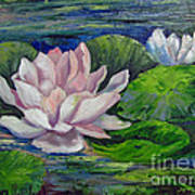 Pink Water Lilies By Barbara Haviland Poster
