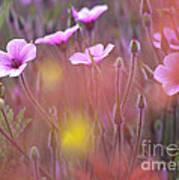 Pink Wild Geranium Poster