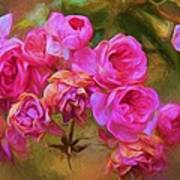 Pink Winter Roses Three Poster