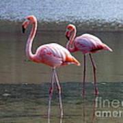 Pinkest Flamingo Poster