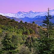 Pinsapar At Sierra Nevada Poster