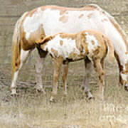 Pinto Mare And Filly Poster