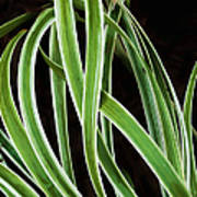 Plant Abstract Poster
